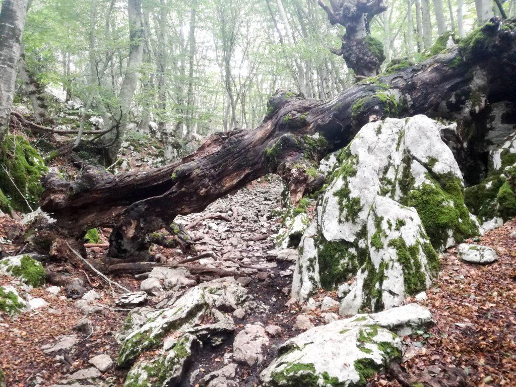 Albero sul sentiero per il monte gennaro