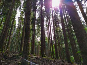 Foresta vallombrosa
